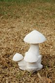 image of garden sculpture  - white mushroom sculpture is on dry turf - JPG