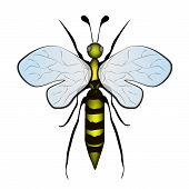 image of bumble bee  - Vector  - JPG
