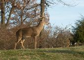 image of deer rack  - Large white - JPG