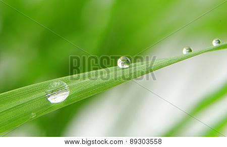 Dew Drops On Fresh Green Grass Blade