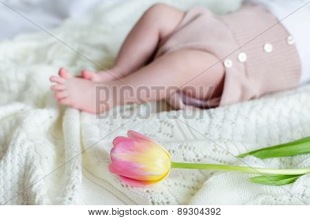 Tiny Little Baby's Feet In Woolen Shorts With Tulip Flower Ahead