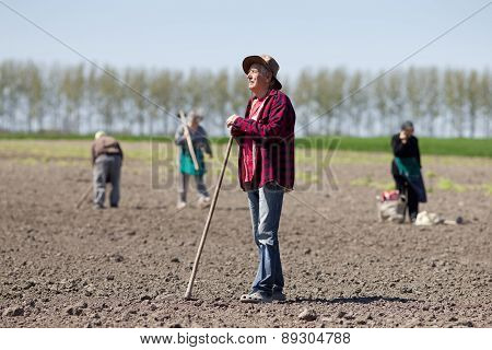Peasants Hoeing On Farmland