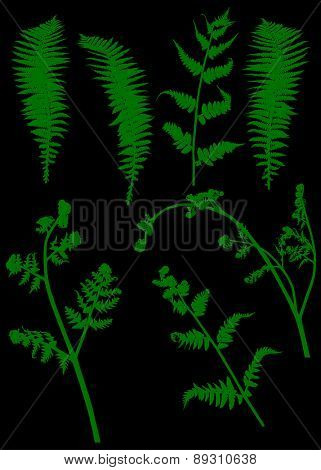 illustration with set of fern silhouettes isolated on black