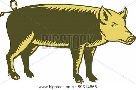Tamworth Pig Side Woodcut