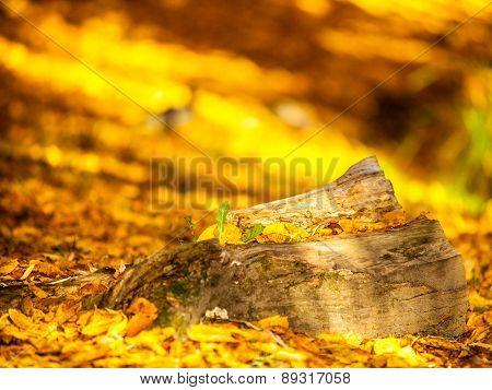 Autumn Scenery In Park