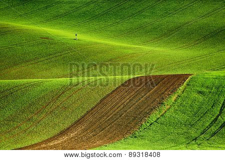 Lines and waves fields, South Moravia, Czech Republic