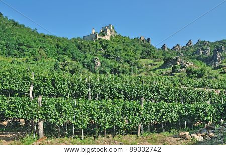 Vineyard of Duernstein in Wachau at Danube River,Lower Austria
