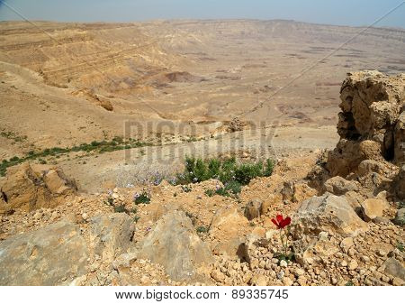 Spring in the desert with red flower.