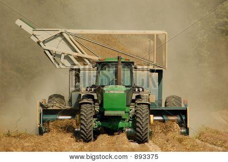 Harvesting Peanuts 1