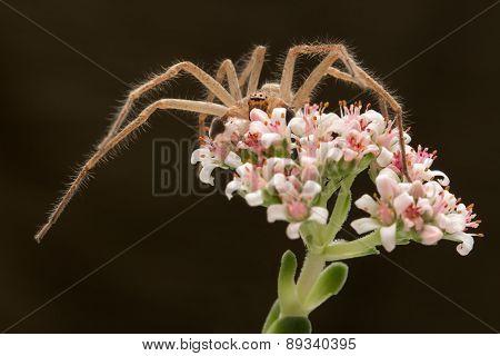 spider on the flower