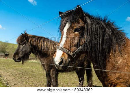 Two Horses On Farm