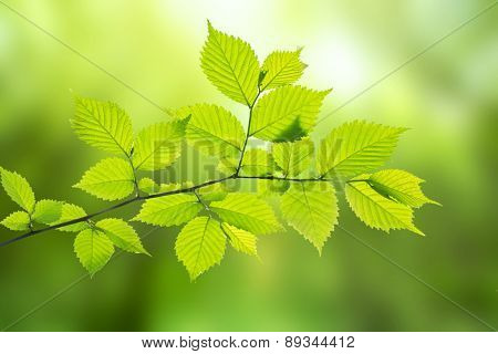 Branch of tree on blured green background