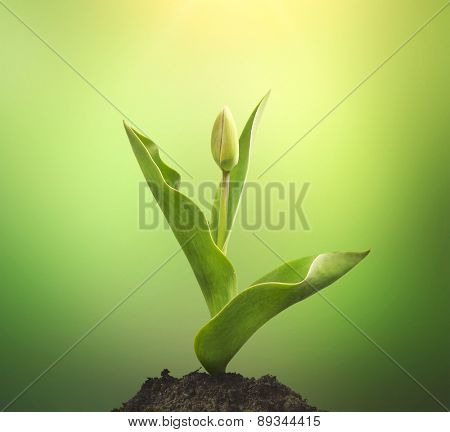 plant  growing seedling in soil isolated on green background