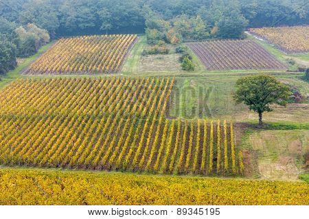 autumnal vineyards, Burgundy, France
