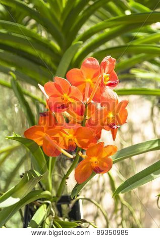 The Beauty Of Orange Orchid.