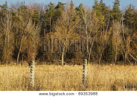 Forest Behind A Barbed Wire Fence