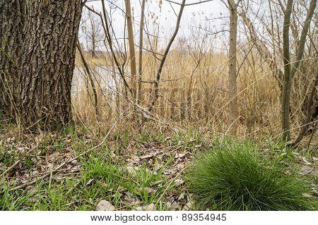 Spring Grass Near The River
