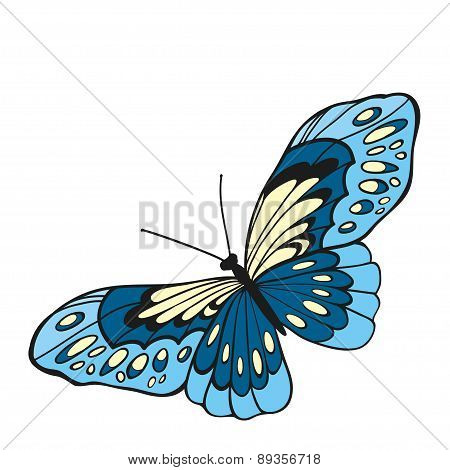 Blue Butterfly With Open Wings In A Top View..