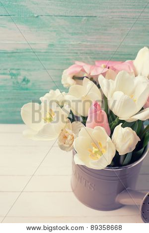 Background With Fresh  Tulips  And Narcissus Flowers