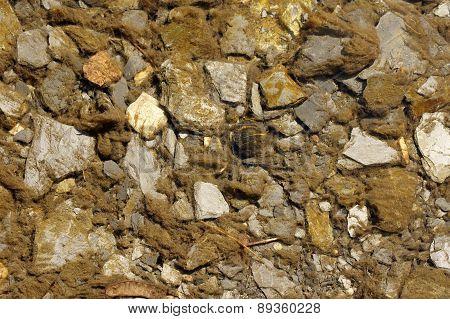 Slate stones and algae in the stream