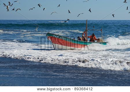 Fishing Boat Coming Ashore with the Catch