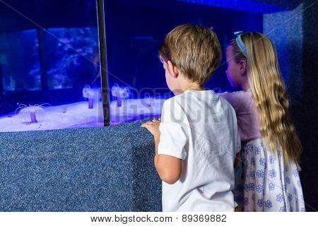 Children looking at sea anemone in tank at the aquarium