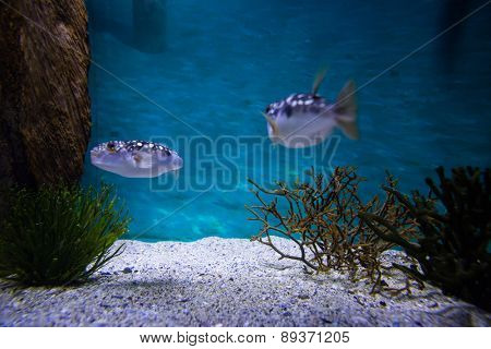 Two fish swimming in a tank at the aquarium