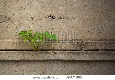 Leaves Of The Plant Through A Concrete Fence.dramatic Look.useful As Background