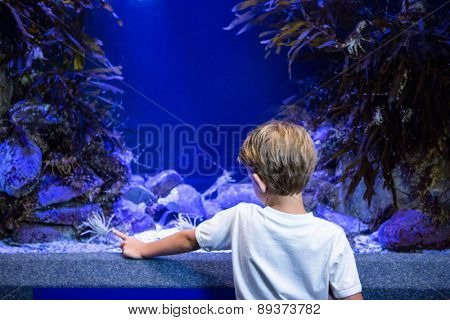 Young man pointing a shrimp in a tank at the aquarium