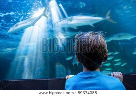 Young man looking at fish in a tank at the aquarium