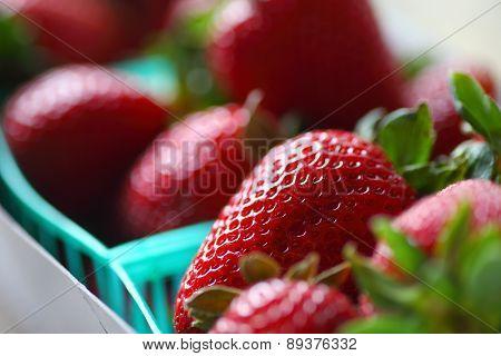Cartons of fresh organic strawberries