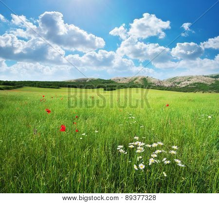 Green spring meadow. Nature landscape composition.