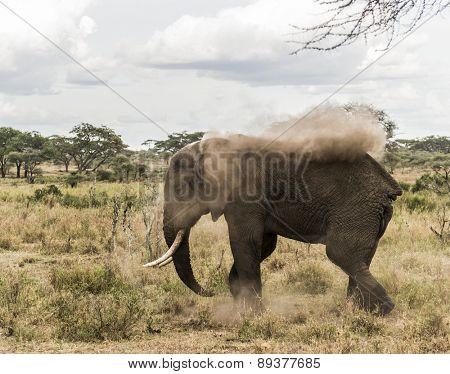 Elephant dust bathing, Serengeti, Tanzania, Africa
