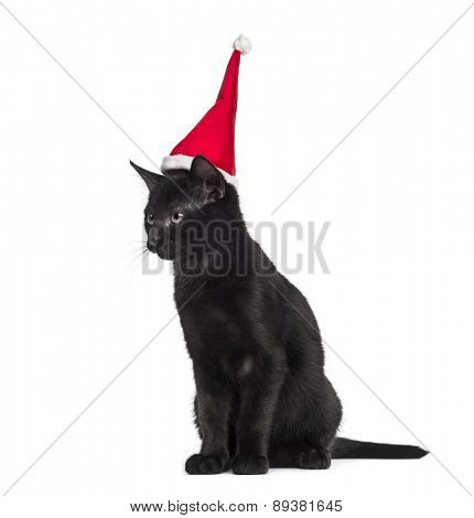 Black kitten sitting and wearing a Santa hat in front of a white background
