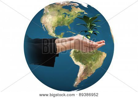 Businesswomans hands presenting against little green seedling with leaves growing