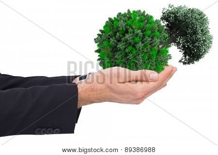 Businessman with arms out presenting something against tree with green leaves growing