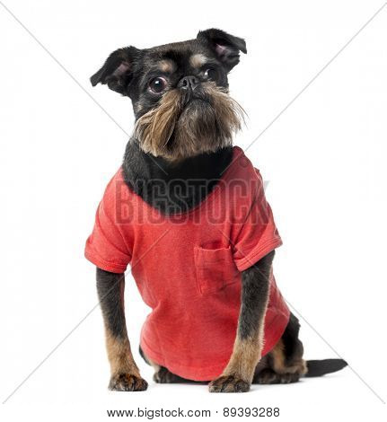 Crossbreed dressed (8 years old) in front of a white background
