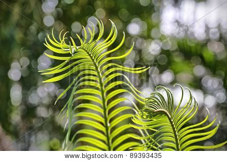 Close Up Of Young Fern With Bokeh In Background