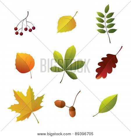 Set Of Autumn Details