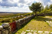 image of wall-stone  - Connemara garden rural Irish countryside with tree and stone wall fields and clouds - JPG