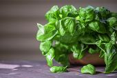 picture of basil leaves  - Fresh organic basil leaves on a wooden table - JPG