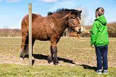 foto of feeding horse  - Young boy in green jacket feeding brown horse with grass on farm - JPG