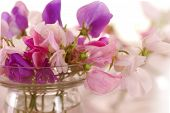 foto of sweet pea  - Bouquet of beautiful sweet peas flowers - JPG