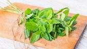pic of oregano  - Fresh oregano on the kitchen board - JPG