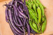 picture of bean-pod  - Young green and purple bean pods on wooden table - JPG