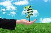 stock photo of presenting  - Businesswomans hand presenting against green field under blue sky - JPG