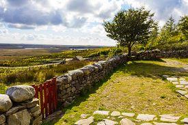stock photo of irish  - Connemara garden rural Irish countryside with tree and stone wall fields and clouds - JPG