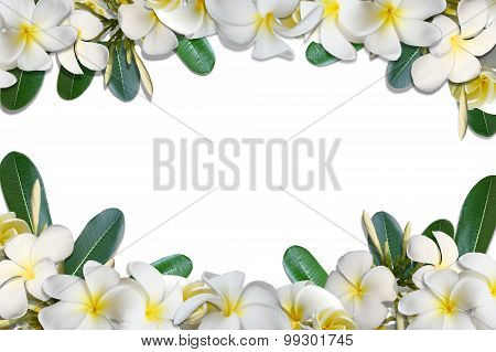 Frangipani flowers and leaf frame isolate on white background