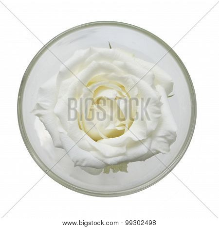 A Glass With One Big White Rose Flower On White Background