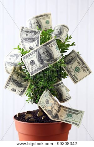Decorative tree in pot with money on wooden background